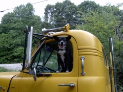 tudogs trucking