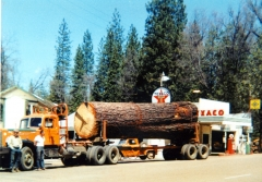 arnold 1958 7000 board feet Of sugar pinesm