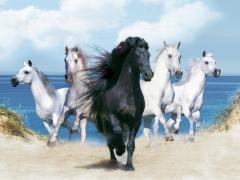 Blk & Wht Horses
